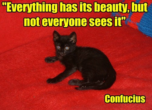 Cats confucius black cats philosophy - 7918858240