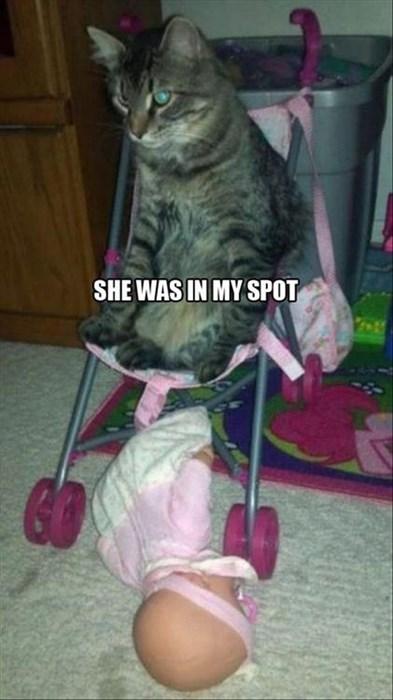 Babies,Cats,dolls,stroller,my spot