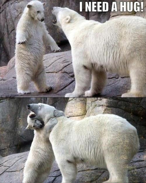 Babies cubs polar bears hug mama - 7919367424