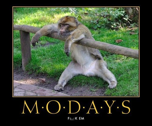 funny,monday,monkey