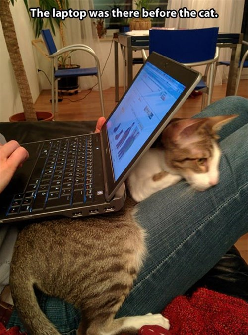 Cats cute snuggle laptop warm - 7919369472
