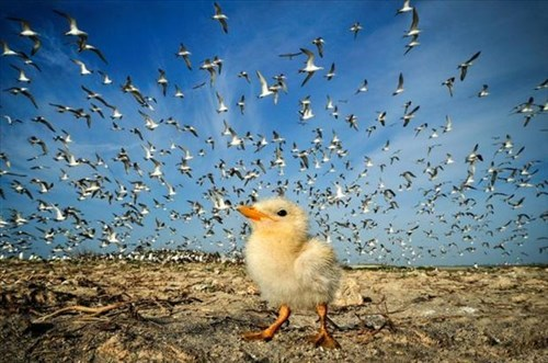 cute chick seagulls squee - 7919375616