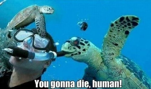 die,burp,snorkel,turtles
