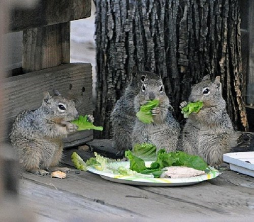 cute salad squirrels squee