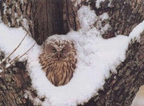 snow sleep owls regret - 7919764992