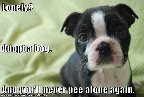 adopt,cute,dogs,puppies,pee alone