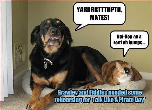 YARRRRTTTHPTH, MATES! Hai-Hou an a rottl ob bumps... Grawley and Fiddles needed some rehearsing for 'Talk Like A Pirate Day'