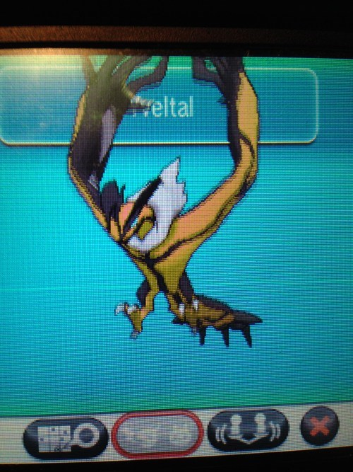 Shiny Ylvetal being awsome