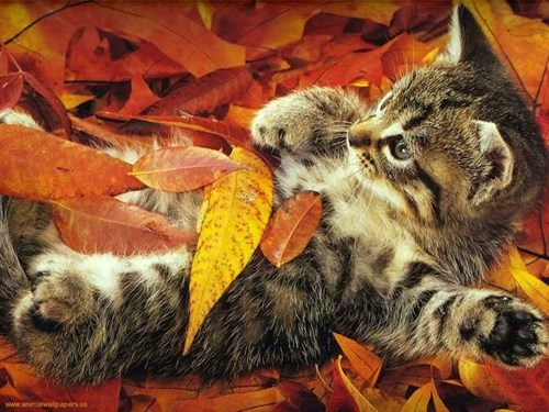 autumn dogs kitten leaves squee spree Cats fall - 7921268992