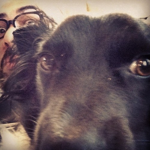 photobomb dogs selfie - 7921657344
