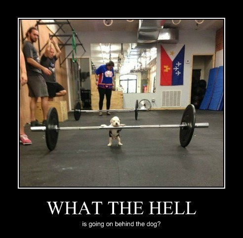 dogs funny weightlifting wtf - 7921789440