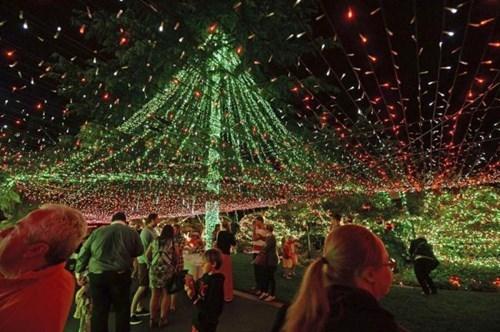 christmas christmas lights funny holidays - 7921908224
