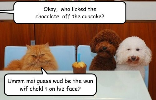 Okay, who licked the chocolate off the cupcake? Ummm mai guess wud be the wun wif choklit on hiz face?