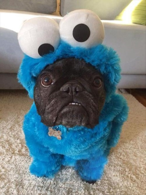 costume cute dogs Cookie Monster