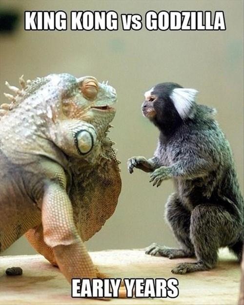 Babies king kong early years godzilla iguanas monkeys monster training - 7922077184