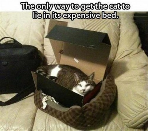 box,Cats,expensive,shoes,sits I fits