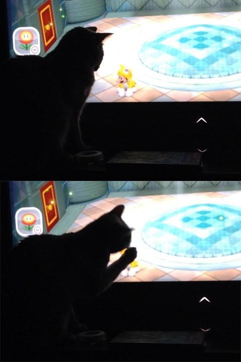 cute Cats Super Mario bros mario - 7923152896