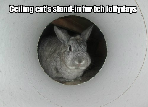 Ceiling cat's stand-in fur teh lollydays