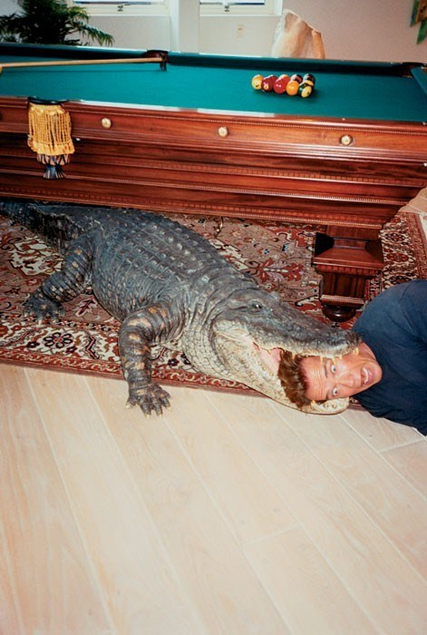 crocodile,alligator,pool table,Arnold Schwarzenegger