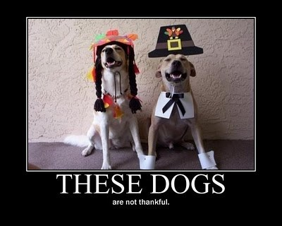 dogs wtf thanksgiving angry funny - 7924148992