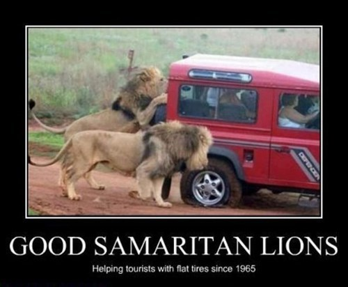 lions cars good samaritan funny - 7924154624