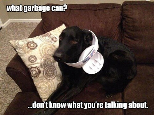 dogs,funny,garbage can,guilty