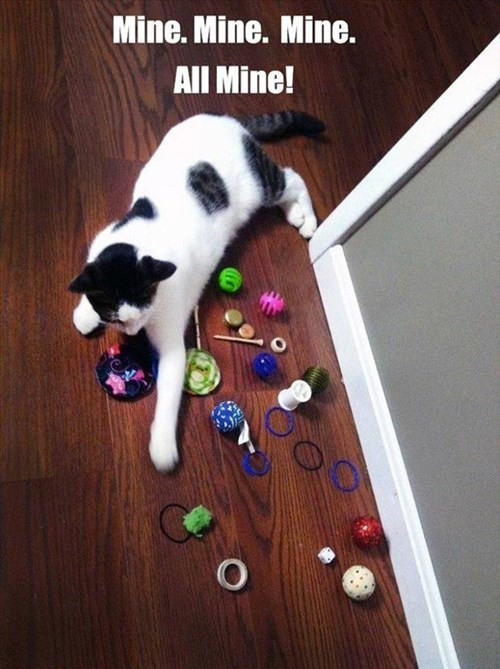 Cats,cute,mine,greedy,toys