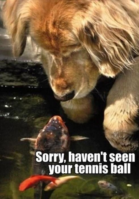 ball dogs help fish friends tennis - 7924407296