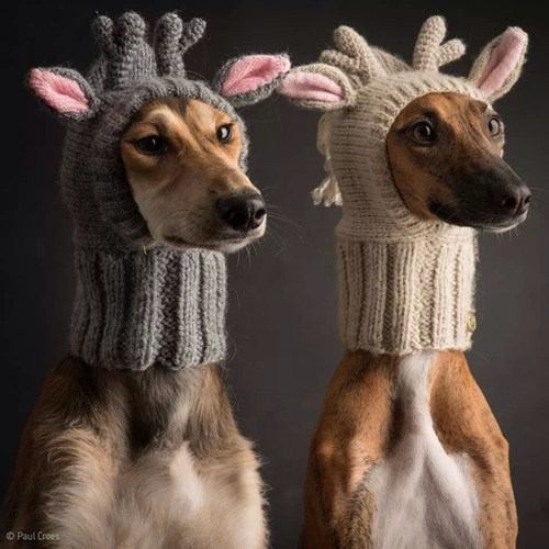 Knitta Please christmas dogs wtf reindeer