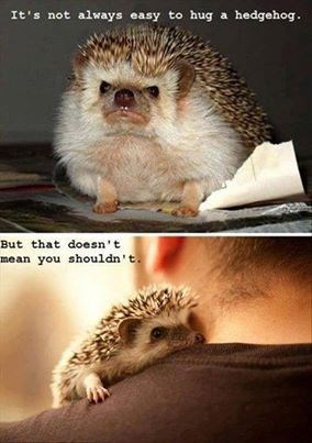 cute hugs snuggle hedgehogs - 7924427520