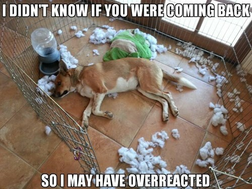 dogs,funny,overreact,shred