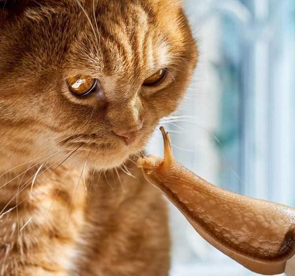 animal photos photos amazing photos - 7924485
