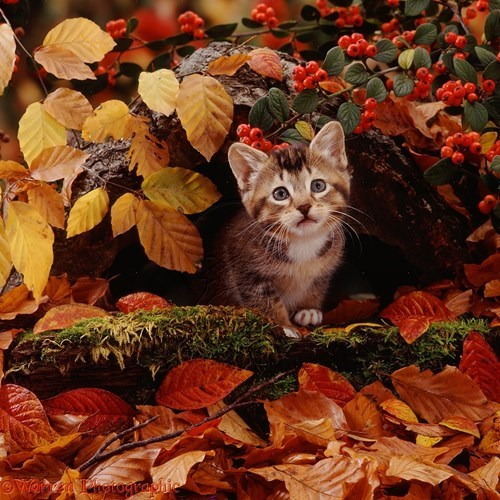 leaves hiding kitten squee spree - 7924523776