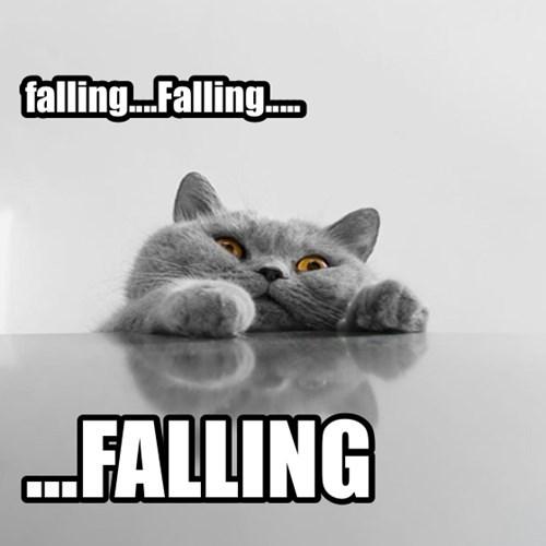 Cats cute falling funny - 7924713472