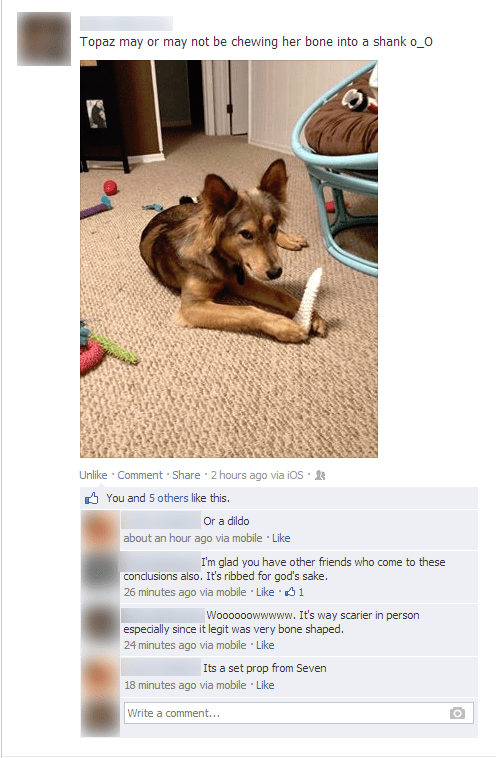 bones dogs - 7924976640