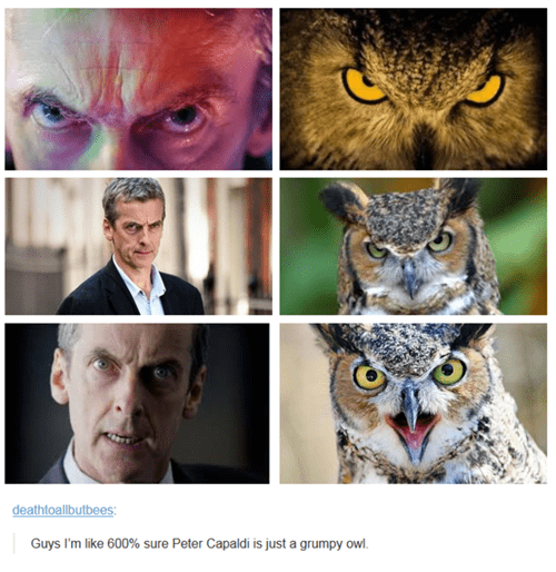 12th Doctor,owls,Peter Capaldi