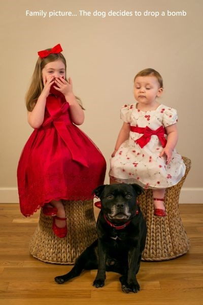 dogs family photos kids photobomb