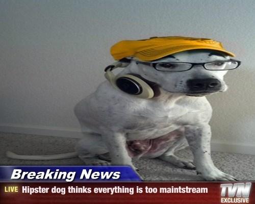 Cheezburger Image 7925615616