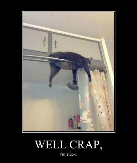cat funny wtf stuck - 7925944576