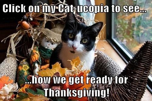 Cats list thanksgiving - 7925973504
