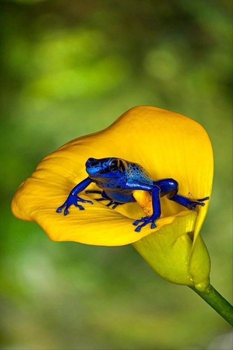 flowers,pretty,frogs,squee
