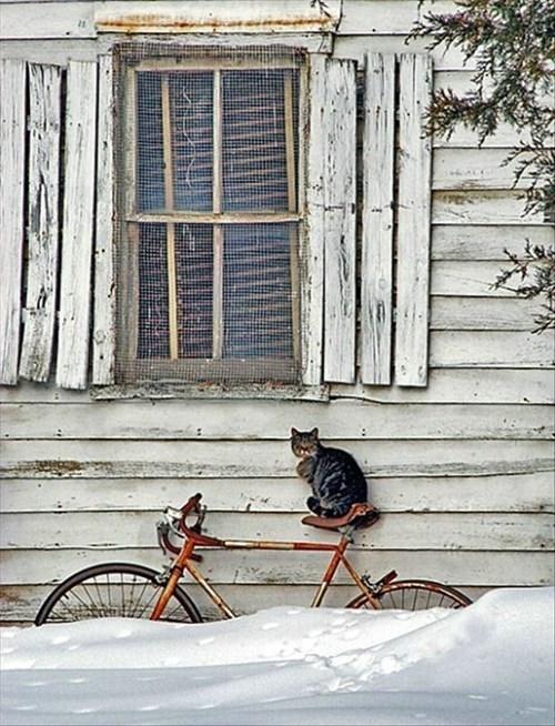 Cats bikes snow - 7926307072