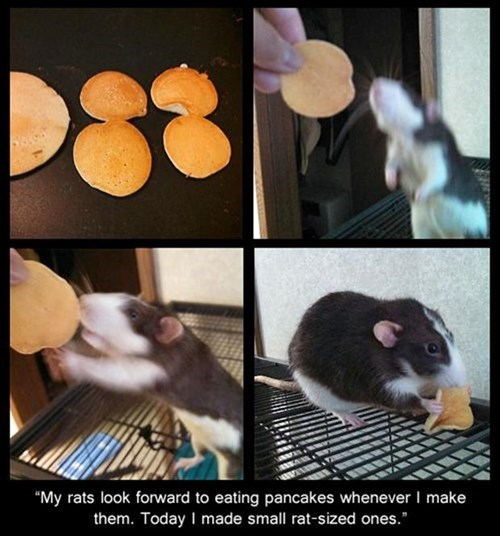 mickey mouse,rats,pancakes