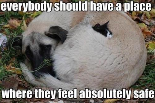 Cats cute dogs kitten safe warm - 7926315264