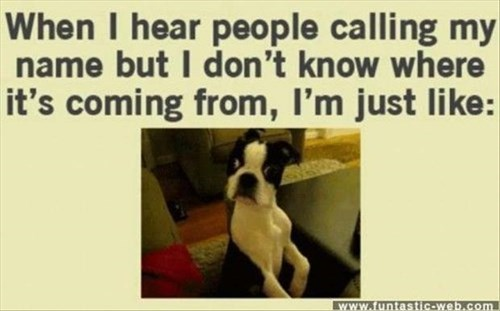 call dogs confused surprised - 7926322432