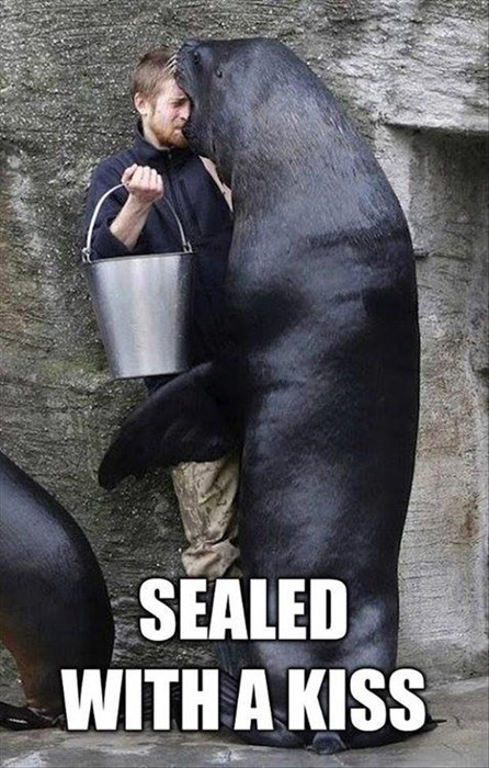 fish funny seal puns KISS gross - 7926326272