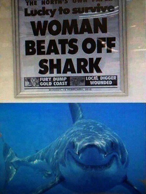 accidental sexy,headline,newspaper,funny,shark
