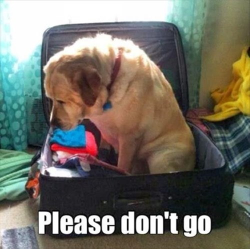 cute dogs dont-go Sad Travel - 7926360064