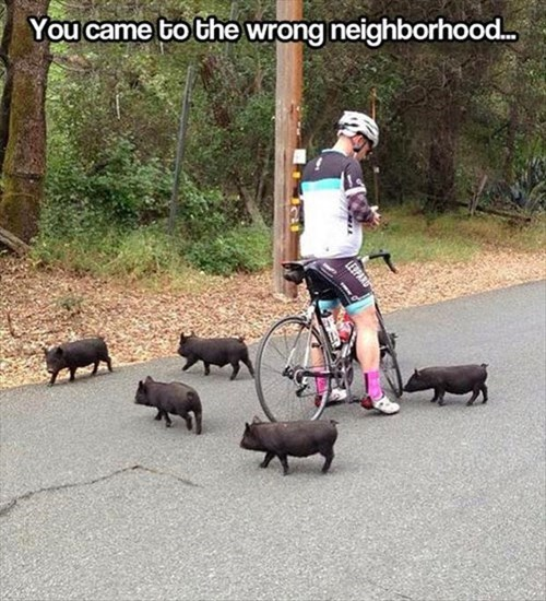 cute,bikes,bullies,steal,neighborhood,pig