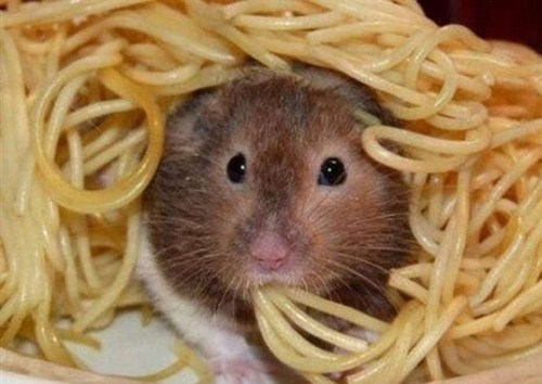cute mice noodles pasta squee